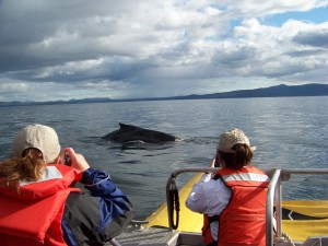 Whale watching in Alaska water is awesome
